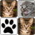Cats Memory Game 2015 icon