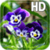 Pansy flowers Live Wallpaper app for free