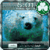 iPhone Polar Bear GoLocker XY icon