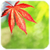 Touch Autumn Leaves Live Wallpaper app for free