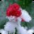 Snowed Rose Live Wallpaper icon