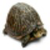 Jumping Turtle icon