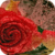 Shiny Red Rose LWP icon
