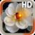 Heart Rose Live Wallpaper app for free