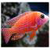 Fish Live Fun For Xperia app for free