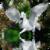 Pegasus Reflection Live Wallpaper app for free