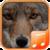 Coyote Sounds app icon