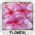 Flower Wallpapers free app for free