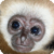 Monkeys : Funny Wild Animals app for free