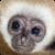 Monkeys : Funny Wild Animals icon
