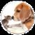 PetCareTips icon