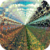Infinity Field Live Wallpaper icon