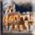Rome Wallpaper icon