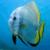 Lagoon Explorer 2 app for free