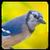 Bird Sound Song Ringtone app for free