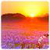 HD Sun Rise Live Wallpaper app for free
