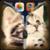 Kitten Zipper Lock Screen HD app for free
