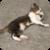 Cat Dreams Live Wallpaper icon