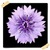 Chicory Flowers Onet Classic Game app for free