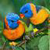 Birds HD Live Wallpapers app for free