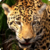 Zoo : Savanna Wild Animals app for free