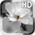 Black and White Flower LWP app for free