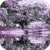 Awesome Lilac Tree Live Wallpaper app for free