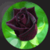 Most Beautiful Black Roses app for free