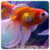Golden Live Fish Wallpaper icon