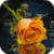 Beautiful Orange Rose Live Wallpaper icon