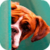 Cute Boxer Puppy LWP app for free