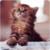 Lovely Kitten Live Wallpaper app for free
