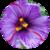 Benefits of Saffron app for free