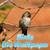 Humming Bird live wallpaper icon