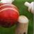 Chauka Cricket Scoring App icon