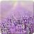Lavender HD Wallpaper - Mindblowing icon