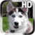 Puppy Husky Live Wallpaper app for free