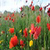 Sea Of Flowers HD icon
