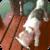 Fisherman Dog Live Wallpaper app for free