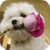Bichon Puppy Live Wallpaper app for free