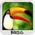 Birds Wallpapers free app for free