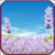 Lavender Field Live Wallpaper app for free