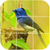 Bird Puzzle Games app for free