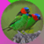 Dazzling Exotic Birds app for free