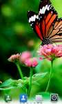 Butterflies Live  Wallpaper  screenshot 2/4