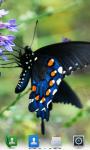 Butterflies Live  Wallpaper  screenshot 3/4