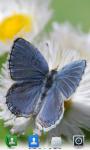 Butterflies Live  Wallpaper  screenshot 4/4