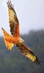 Eagle Flying LWP screenshot 1/3