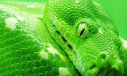 Snake Lovers Wallpaper screenshot 2/4