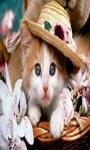 cat Lovely Wallpapers HD1 screenshot 1/6